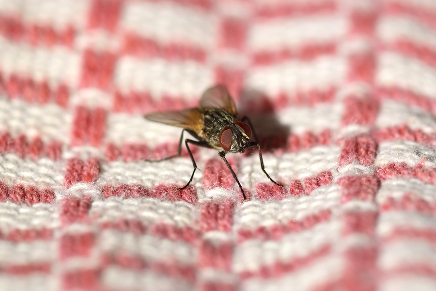 fly on a towel